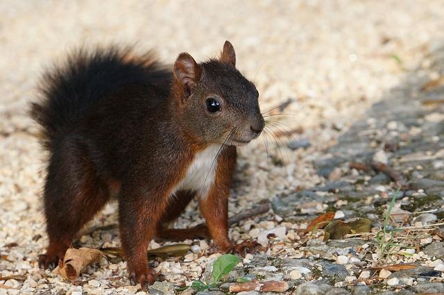 """Das """"Eichhörnchen"""" auf dem Fahnenmast"""